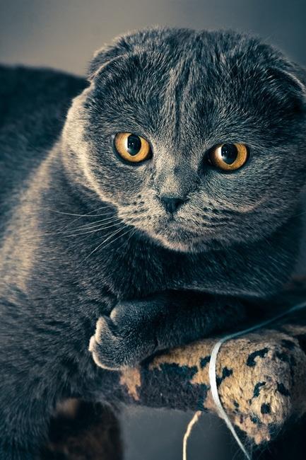 Czyżby kot z Cheshire?